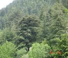 Ain Zhalta Cedars Reserve