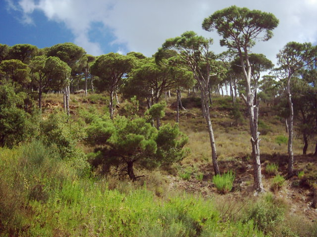Jezzine Mountains View