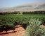 Lebanon Wine
